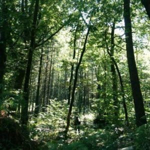Sortie les vertus de la forêt – Forêt du Morbihan – Trédion