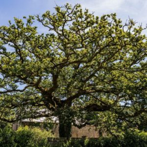 Sortie les vertus de la forêt / Forêt du château de Kerambarh
